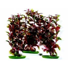 HAGEN Rostlina Red Ludwigia 30 cm 3ks (101-PP2122)