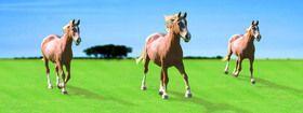 ABC Develop s.r.o. Záložka Úžaska Cválající koně cena od 0,00 €
