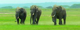 ABC Develop s.r.o. Záložka Úžaska Dusající sloni cena od 0,00 €