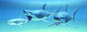 ABC Develop s.r.o. Záložka Úžaska Hladoví žraloci cena od 0,00 €